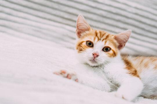 Close-up portrait of cute ginger kitten