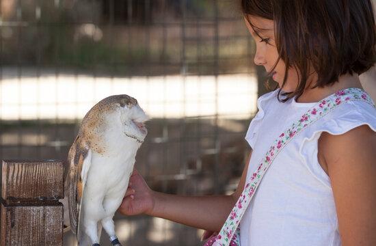 Child girl caress barn owl