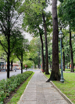 Road with many trees in downtown Saigon, Vietnam