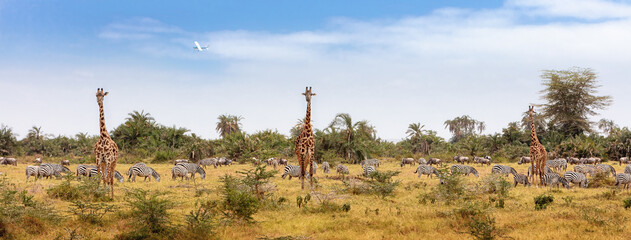 Fototapeta premium African Safari Animals Web Banner