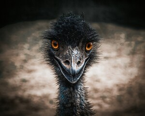 ostrich head close up