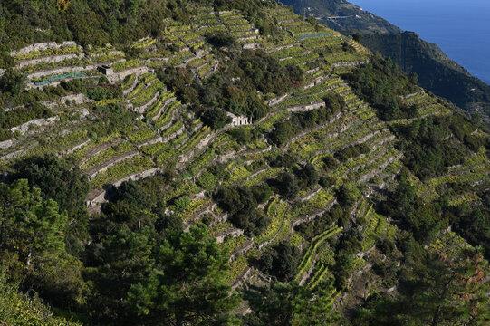 Vista sulla collina con terrazzamenti, quasi scomparsi, per la coltivazione della vite per produrre il famoso vino delle 5 Terre