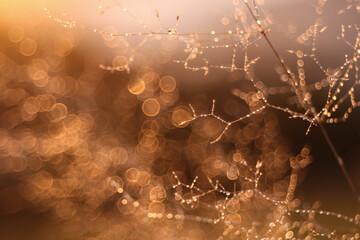 Obraz Jesienna impresja - fototapety do salonu