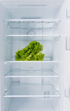 against the background of a white refrigerator, there is a green leafy fresh salad on a glass shelf