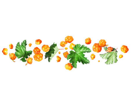 Fresh сloudberry in the air with leaves, isolated on a white background
