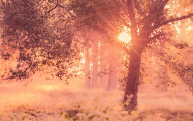 Obraz Beautiful sun-drenched landscape in a mystical forest - fototapety do salonu
