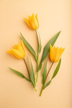 Orange tulip flowers on orange pastel background. top view, close up.