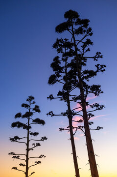 Trees Silhouettes over a sunset