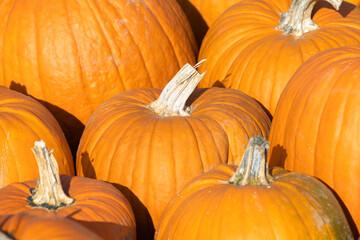 detail of orange colored pumpkins