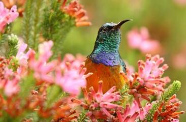 Fototapeta premium bird of paradise
