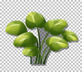 Tropical plant on transparent background