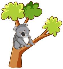Koala bear on a tree on white background