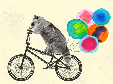Contemporary art collage, modern creative design. Idea, inspiration, care, trend magazine style. Raccoon riding a bike