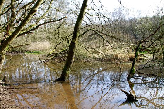 Biotop, Naturschutz, Blumenthal, Niedersachsen, Deutschland, Europa   -- Biotope, Nature conservation, Blumenthal, Lower Saxony, Germany, Europe