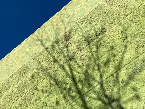 Looking up at green painted, breeze-block wall with shadow of a tree, deep blue sky in corner