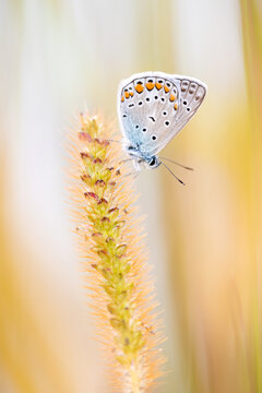 Selective focus of the beautiful white spotted butterfly on the plant in the field