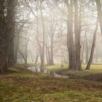 River in a forest park. Autumn colors, fog, mist, overcast day. Mighty trees, dry plants, green grass, moss, golden leaves. Early spring. Reflections on water, mirror. Dark atmospheric landscape