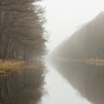 Canal (river) in a forest park. Autumn colors, fog, mist, overcast day. Mighty trees, dry plants. Early spring. Symmetry reflections in crystal clear water, natural mirror. Dark atmospheric landscape