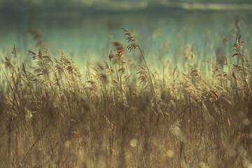 Fototapeta łąka w słońcu obraz