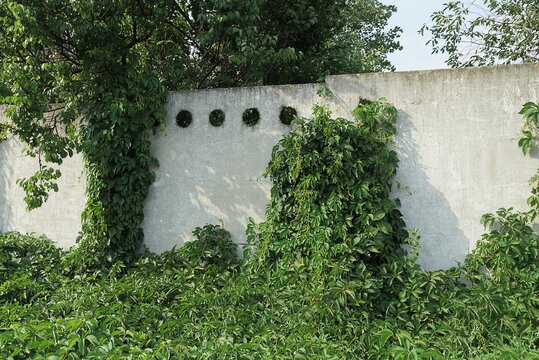 white concrete wall fence overgrown with green vegetation and grass in the street