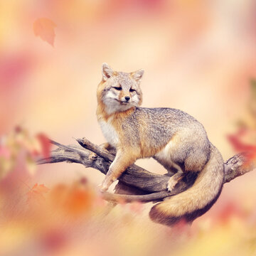 Red fox on a branch