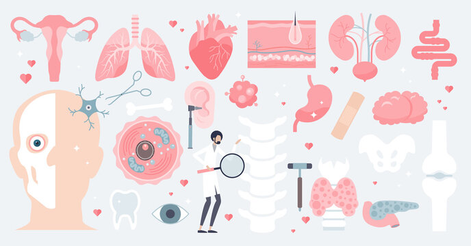 Human anatomy and isolated medical organs in tiny person collection set. Elements with inner parts from digestive or cardiovascular system vector illustration. Physiological body assets and resources.