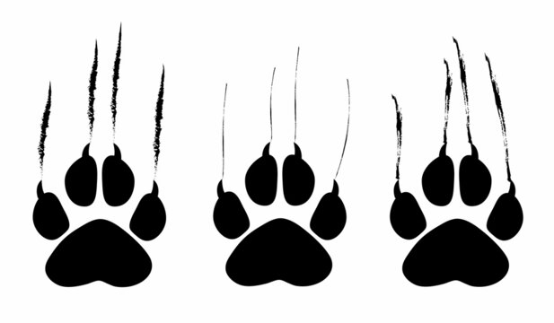 Animal footprint and scratches on white background,  vector illustration