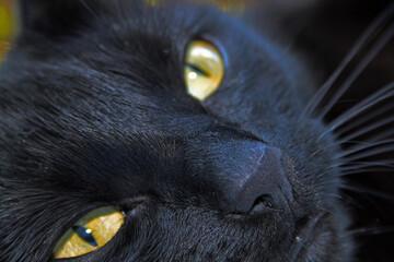 Fototapeta Czarny kot obraz