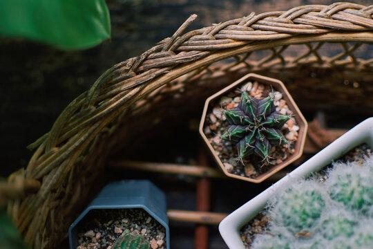 plant cactus pot succulent flower.