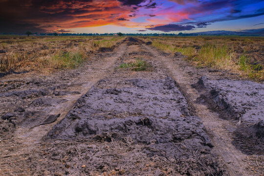 Wheel tracks in the soil. Country road Natural Morning landscape