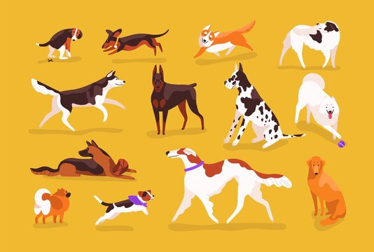 Bundle of cute dogs of various breeds playing, running, walking, sitting, pooping. Set of adorable cartoon pet animals isolated on yellow background. Colorful vector illustration in flat style